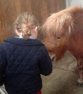 Alice Burford feeds Ollie the superstar Shetland